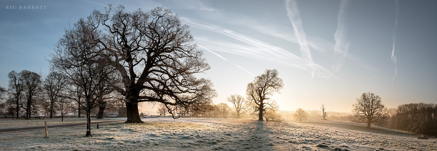 Silhouettes of trees against brilliant orange sunrise on a frosty dawn.