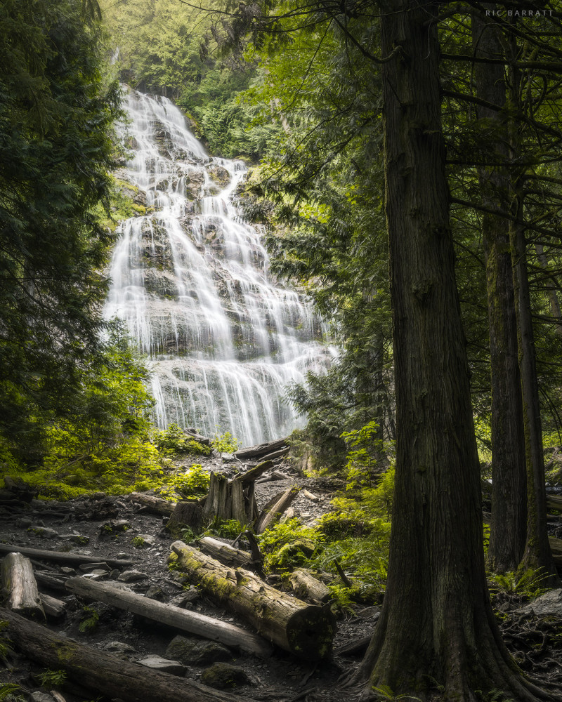Steams of water fall down tall, rocky wall in lush, green woodland.