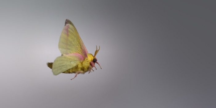 Insect flight videos